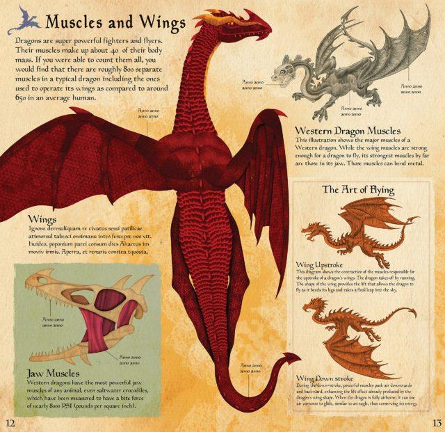 Build The Dragon2